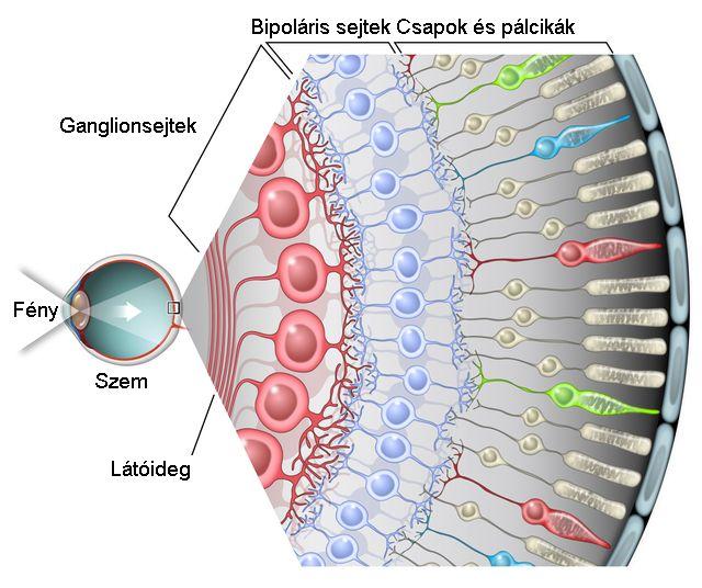 látás trombózissal hasi daganat gyanúja