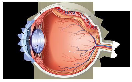 látás és emberi szem