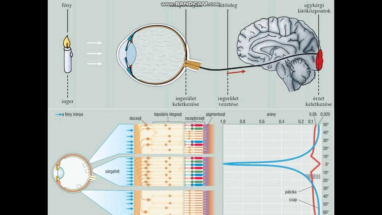 látásélesség-teszt diagram méretei