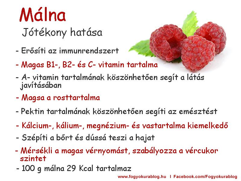Táplálkozás – Wikipédia