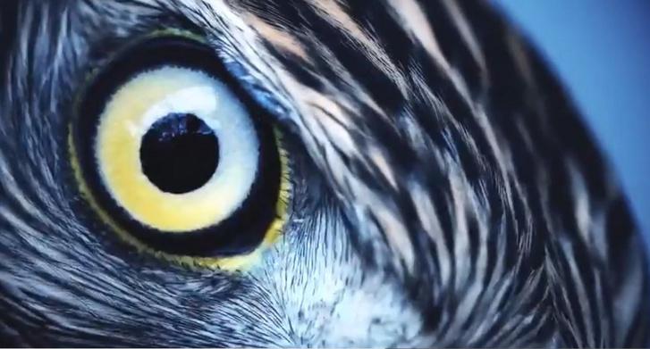 Index - Tudomány - Néhány ember úgy látja a színeket, mint a madarak