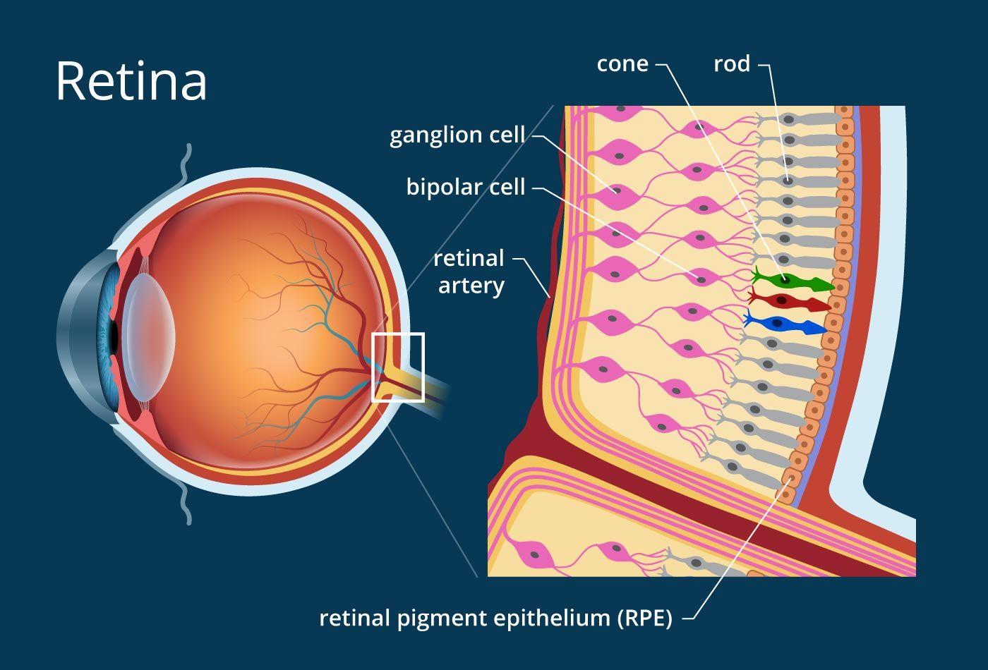 az emberi szem látásmutatói