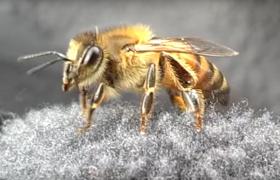 van-e látása a méheknek