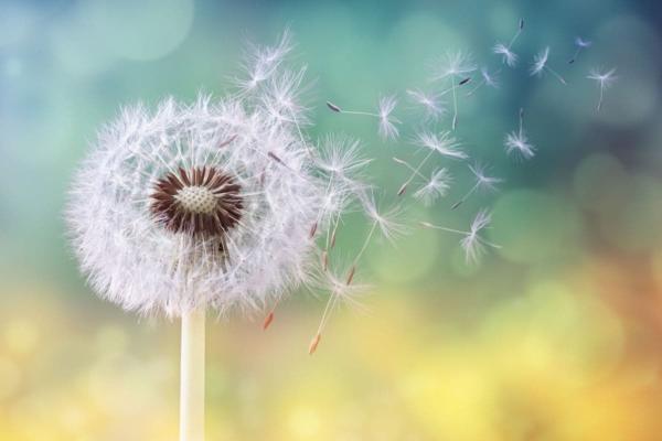 pollen a látáshoz
