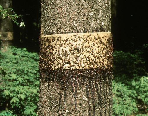fa tetvek látása