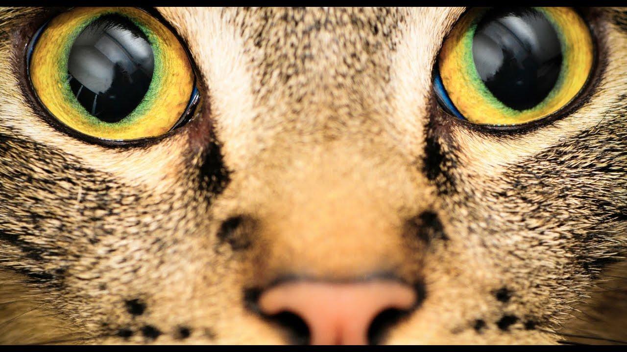 mi a légy látása helyreállított látás gyakorlatokkal