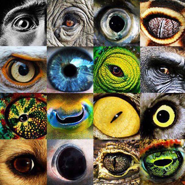 Amit a látású ember lát