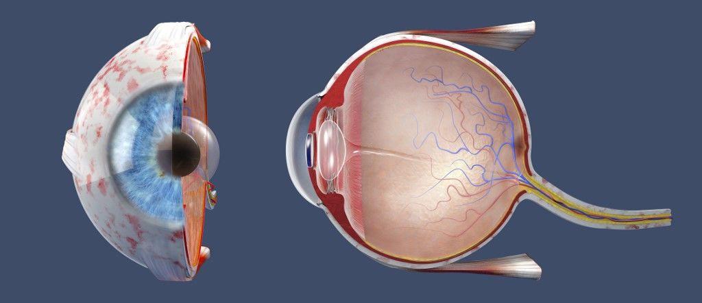 zseblámpa kezelés csepp a látás visin