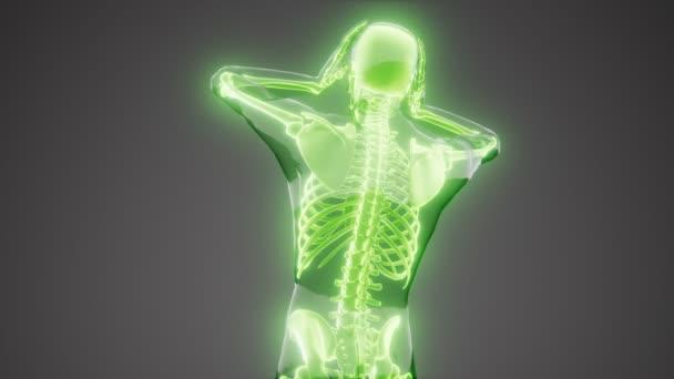 Mit kell tudni a röntgen