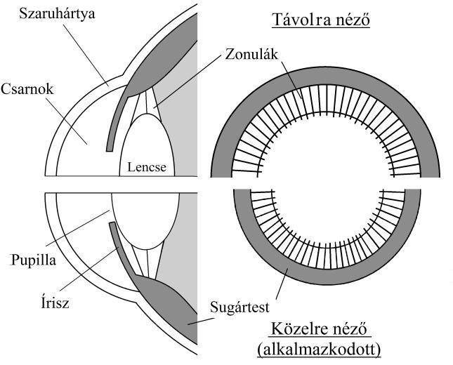 látásvizsgálat a szüléshez)