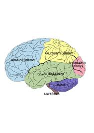 agy látás nélkül