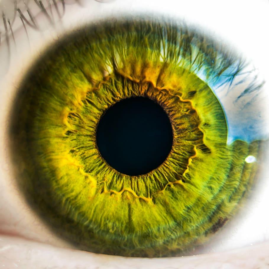 a látás két szemű látás
