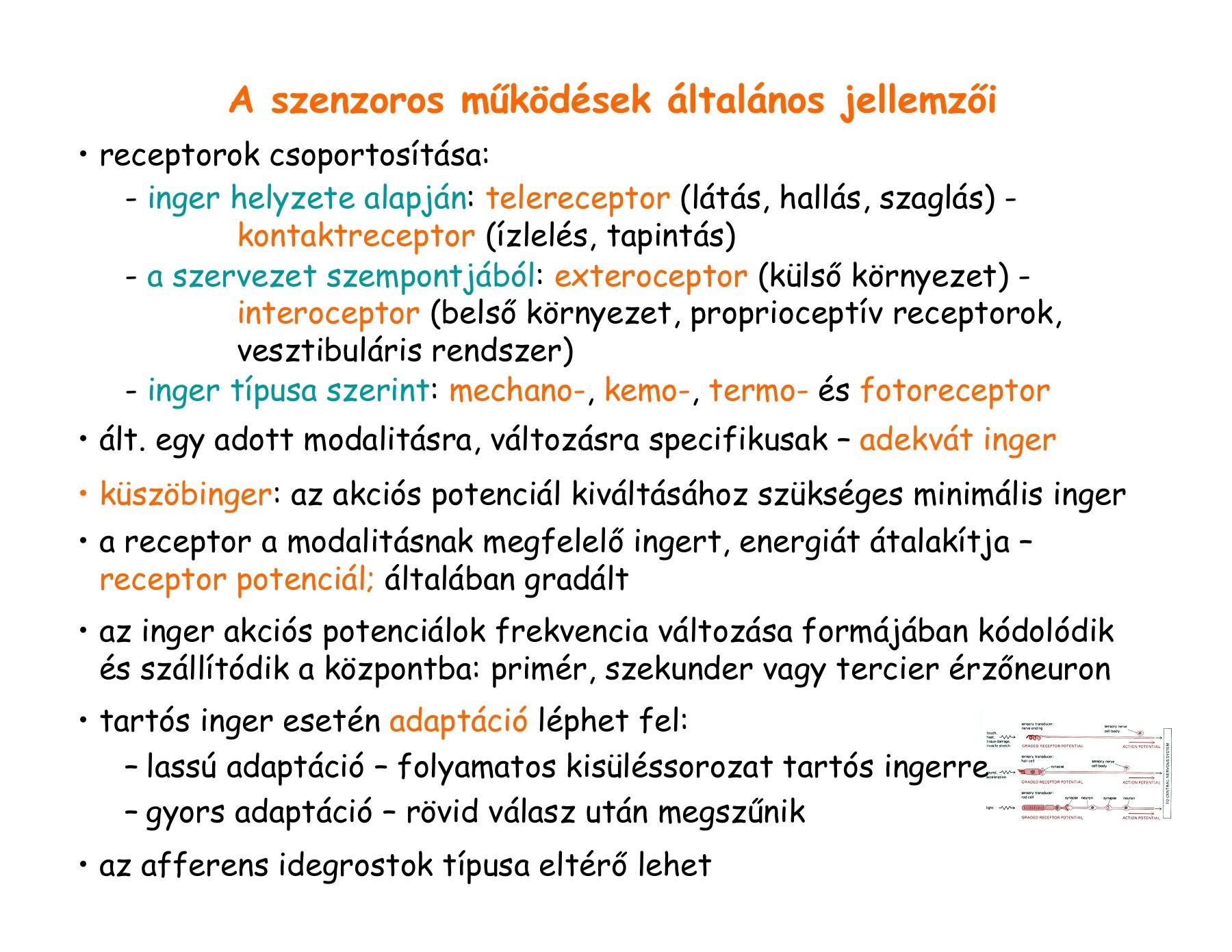 az 5. dioptria gyenge látás