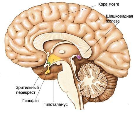 látáskárosodás traumás agyi sérüléssel