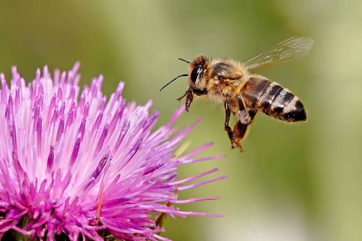 látás és méh