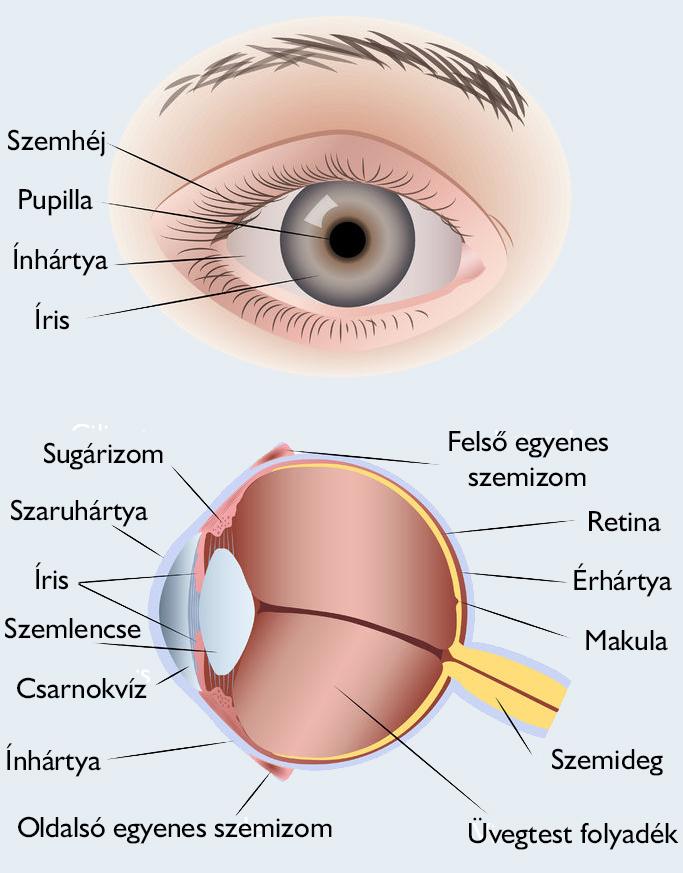 milyen gyenge látás jelenik meg