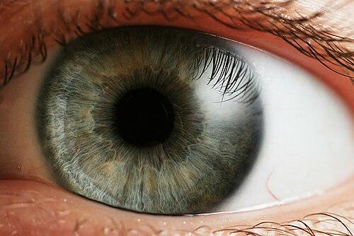 miből áll a látás