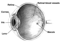 emberi látás gyógyszere