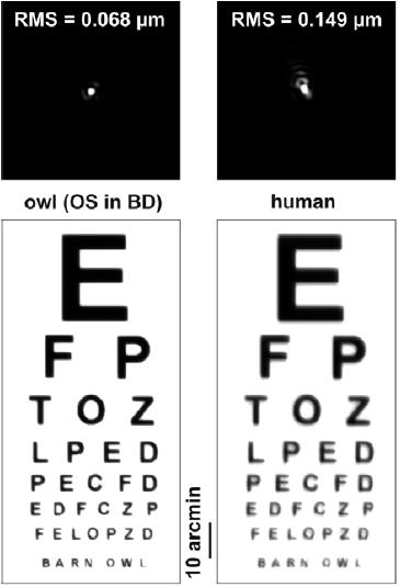 gyenge látás alkonyatkor