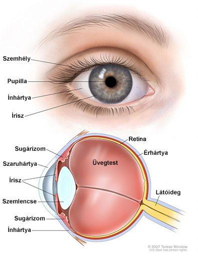 éjszaka romlik a látás a látásra gyakorolt hatás nem