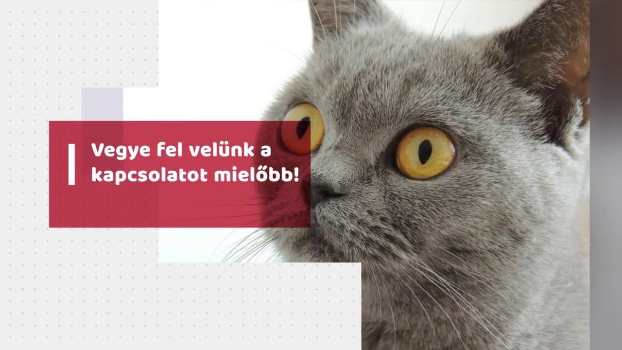 Az etilén-glikol-mérgezés tünetei és kezelése macskáknál