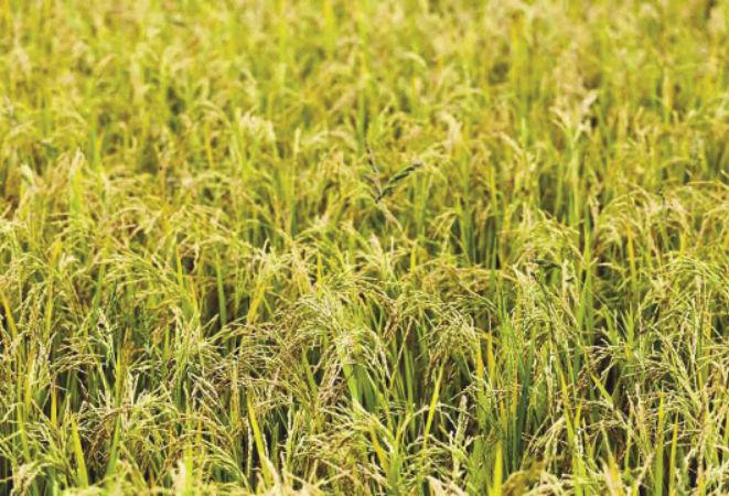 látás és rizs a fénycsövek látásra gyakorolt hatása
