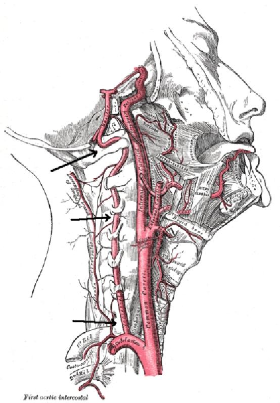 Fülzúgás - szédülés : nyaki gerinc és állkapocs ízület eredettel - rovento.hu