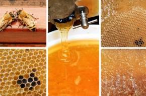 méhészeti termékek és jövőkép