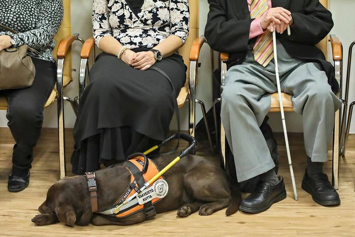 segítség a látássérültek számára