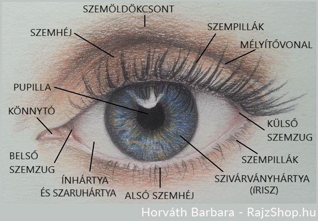 sürgősen javítsa a látást karate myopia
