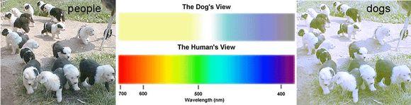 miért rossz az emberek látása könnyen visszanyerhető a látás