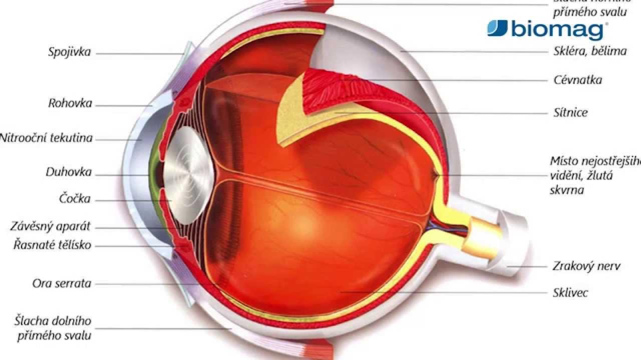 Hatékony szemcsepp a myopia felülvizsgálatához