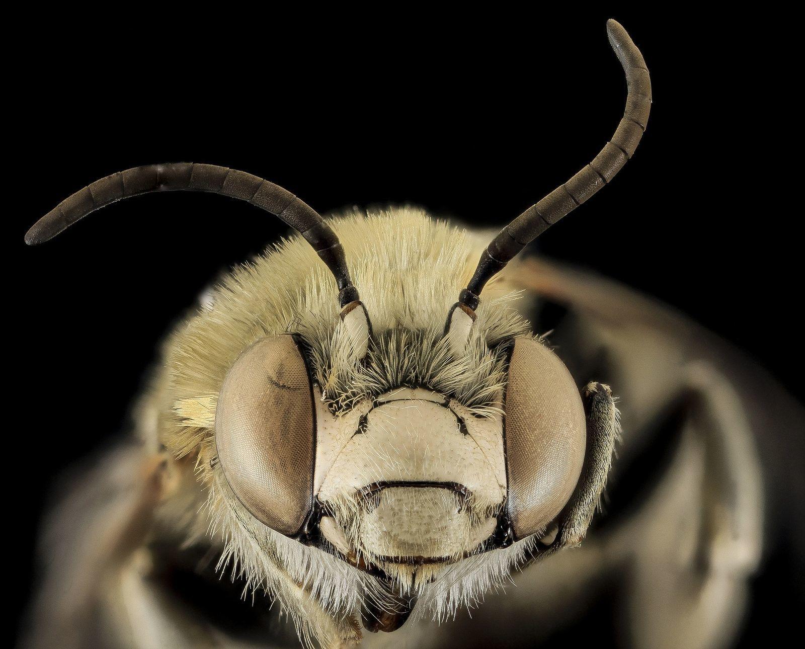 van-e látása a méheknek mit jelent a mínusz egy látás